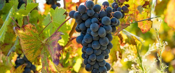 Rückblick auf unser Weinjahr 2020